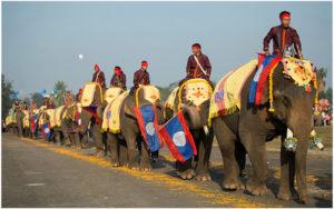 Фестиваль слонов в Сяйнабули