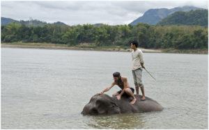 Катание и купание на слонах в Меконге