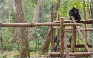 Центр реабилитации малайских медведей у водопада Куанг Си